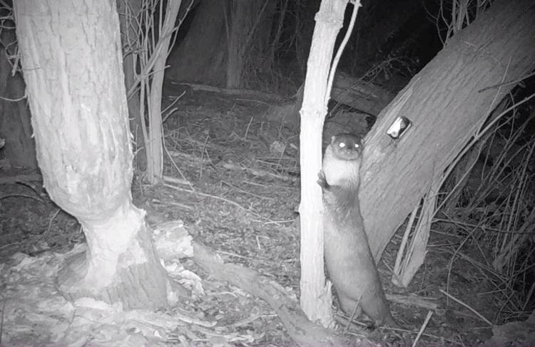 Otter in de Durmevallei