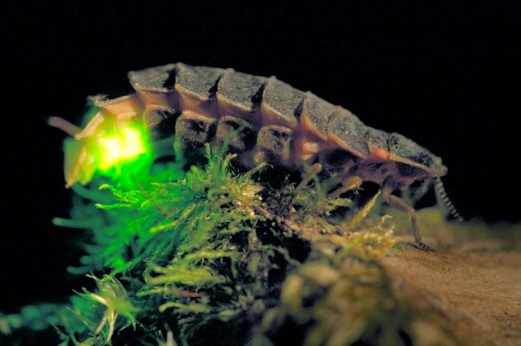 vilda-4140-grote-glimworm-rollin-verlinde-800-px-53072.jpg