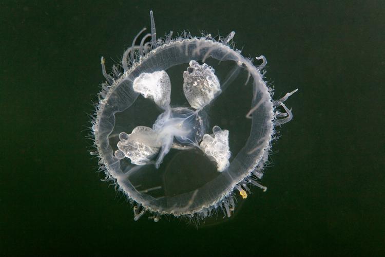 zoetwaterkwal-bovenaanzicht.jpg