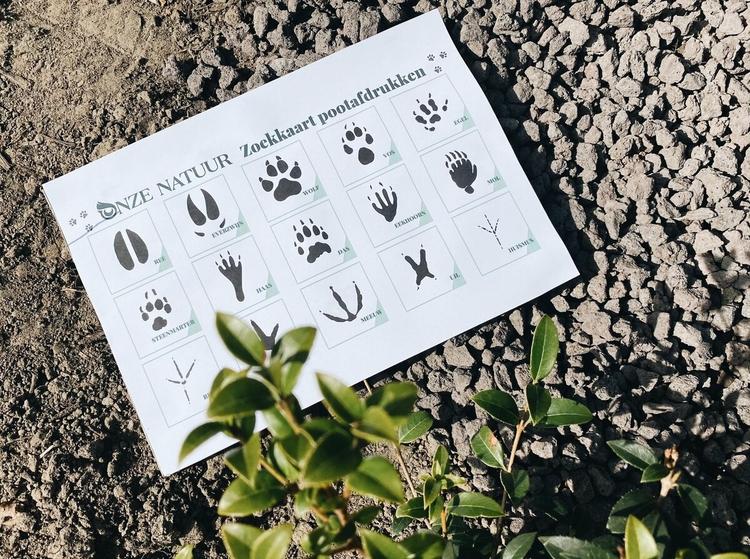 pootafdrukken-diersporen-onze-natuur.jpeg