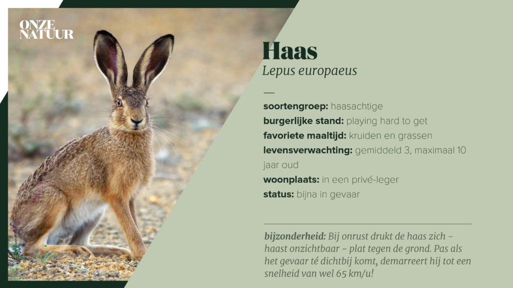 on-fiche-haas-1024x576.png