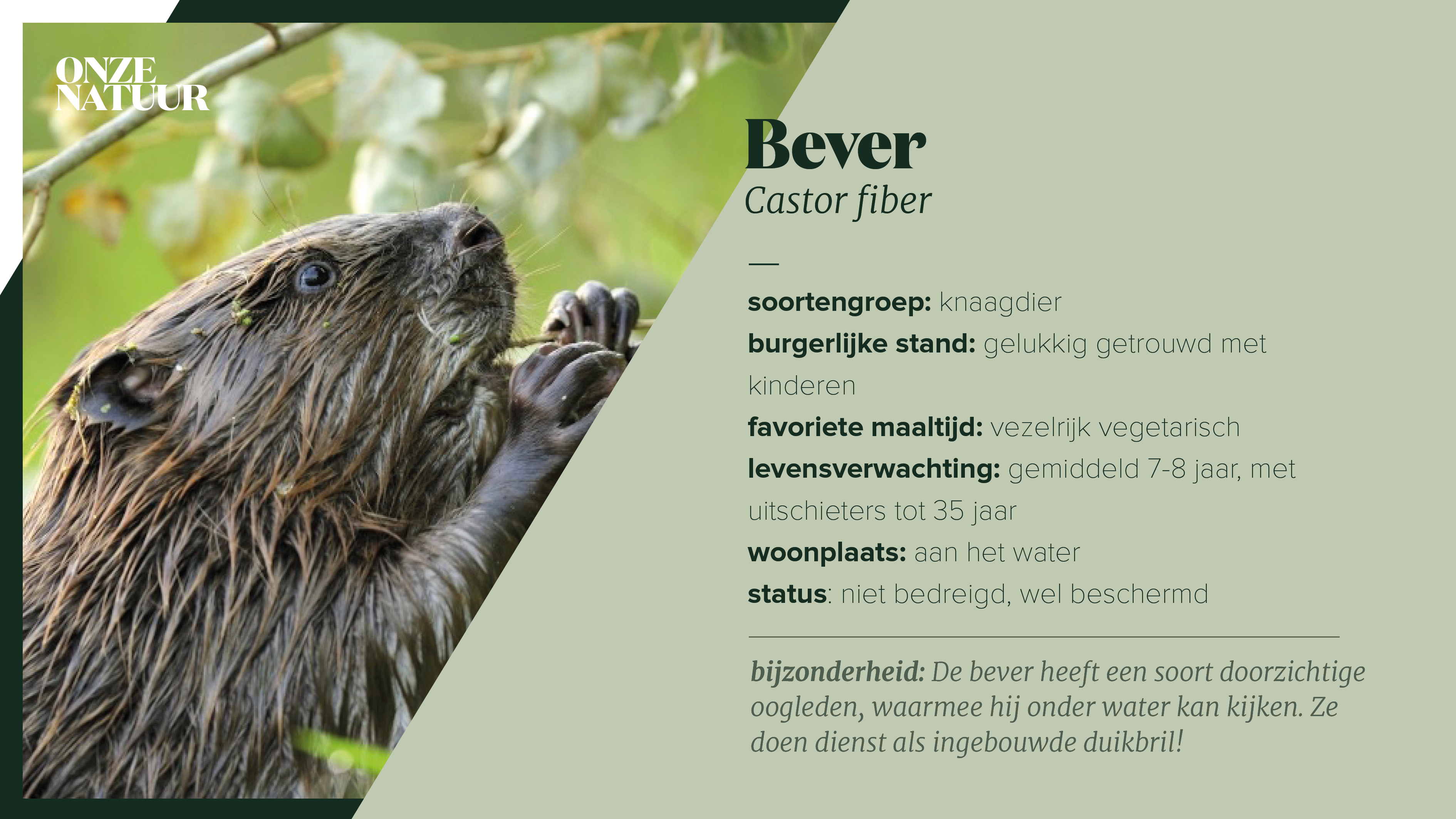 on-fiche-bever.png
