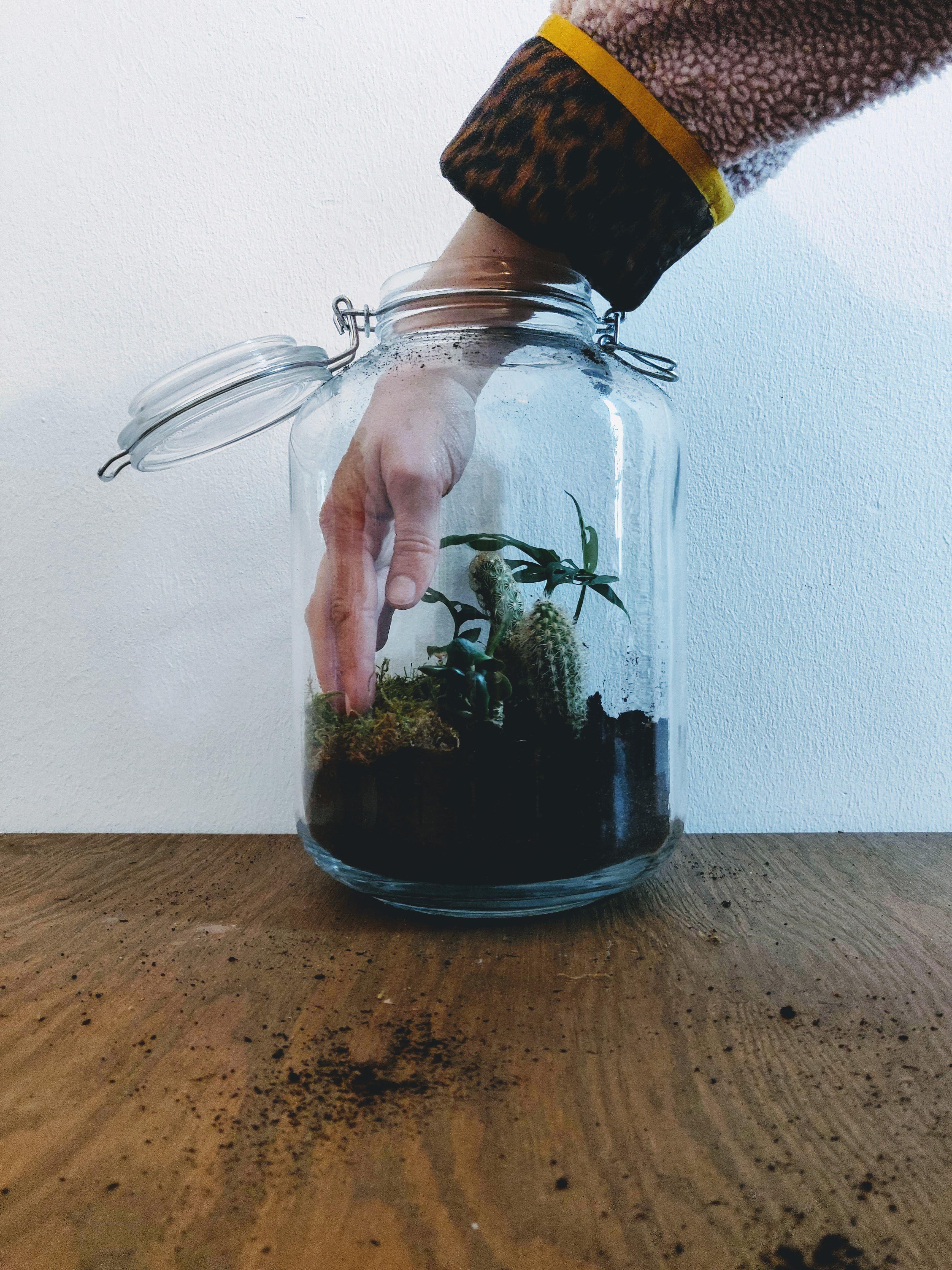 Planten terrarium vullen