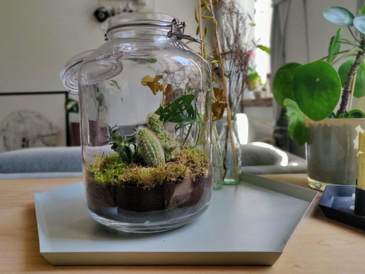 Planten terrarium in een grote bokaal