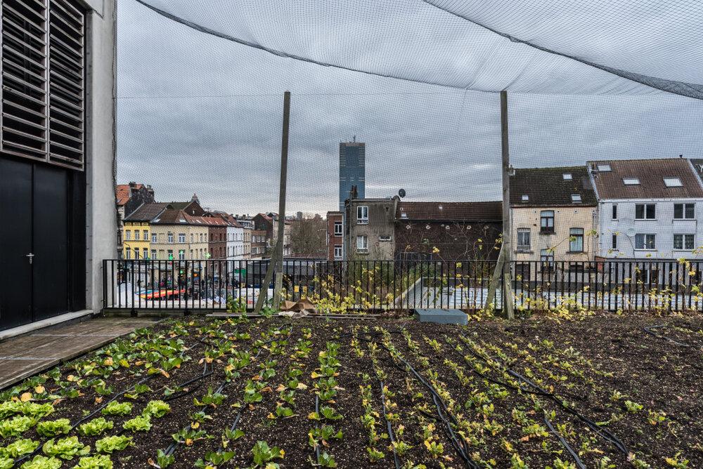 Stasdboerderij op dak in Anderlecht