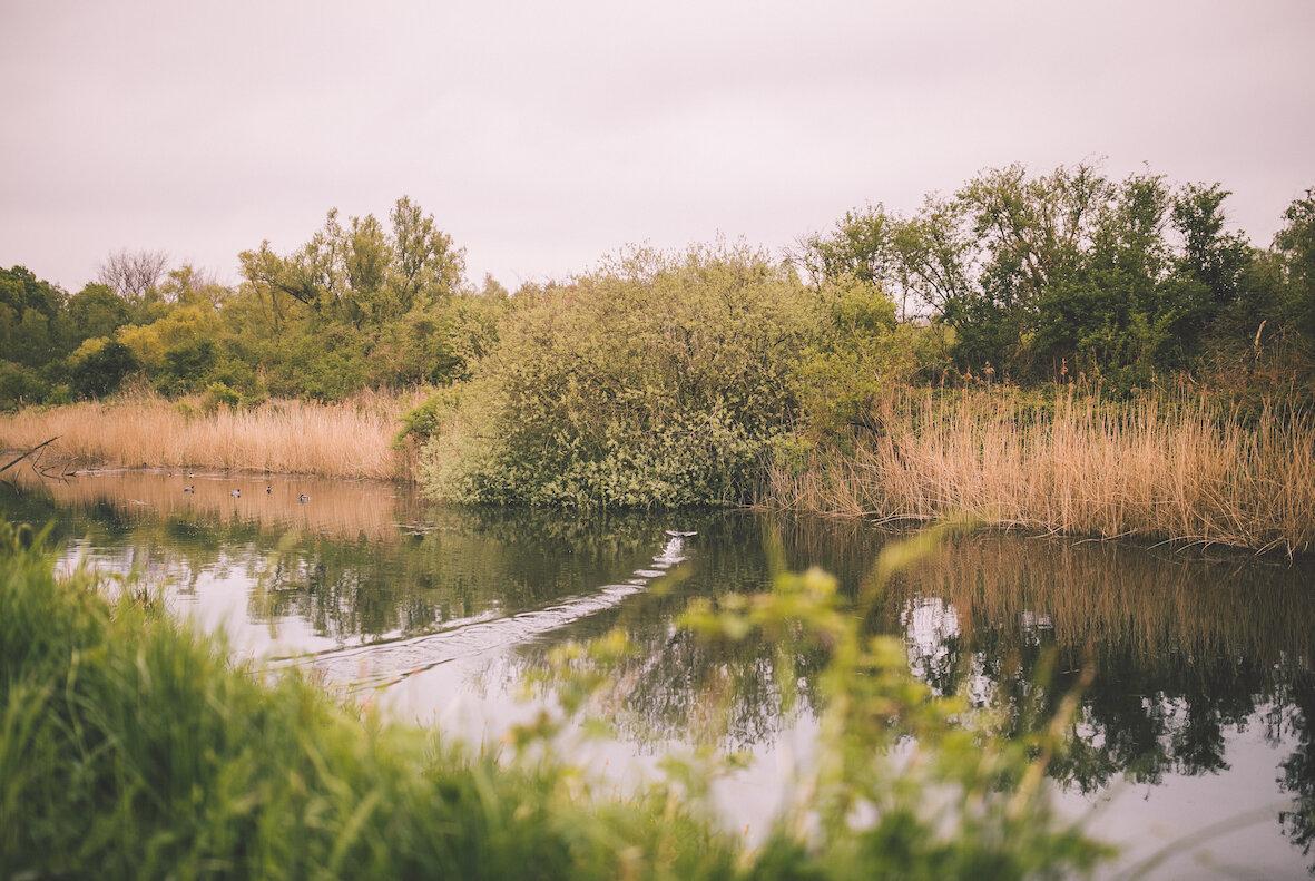 watervogels.JPG