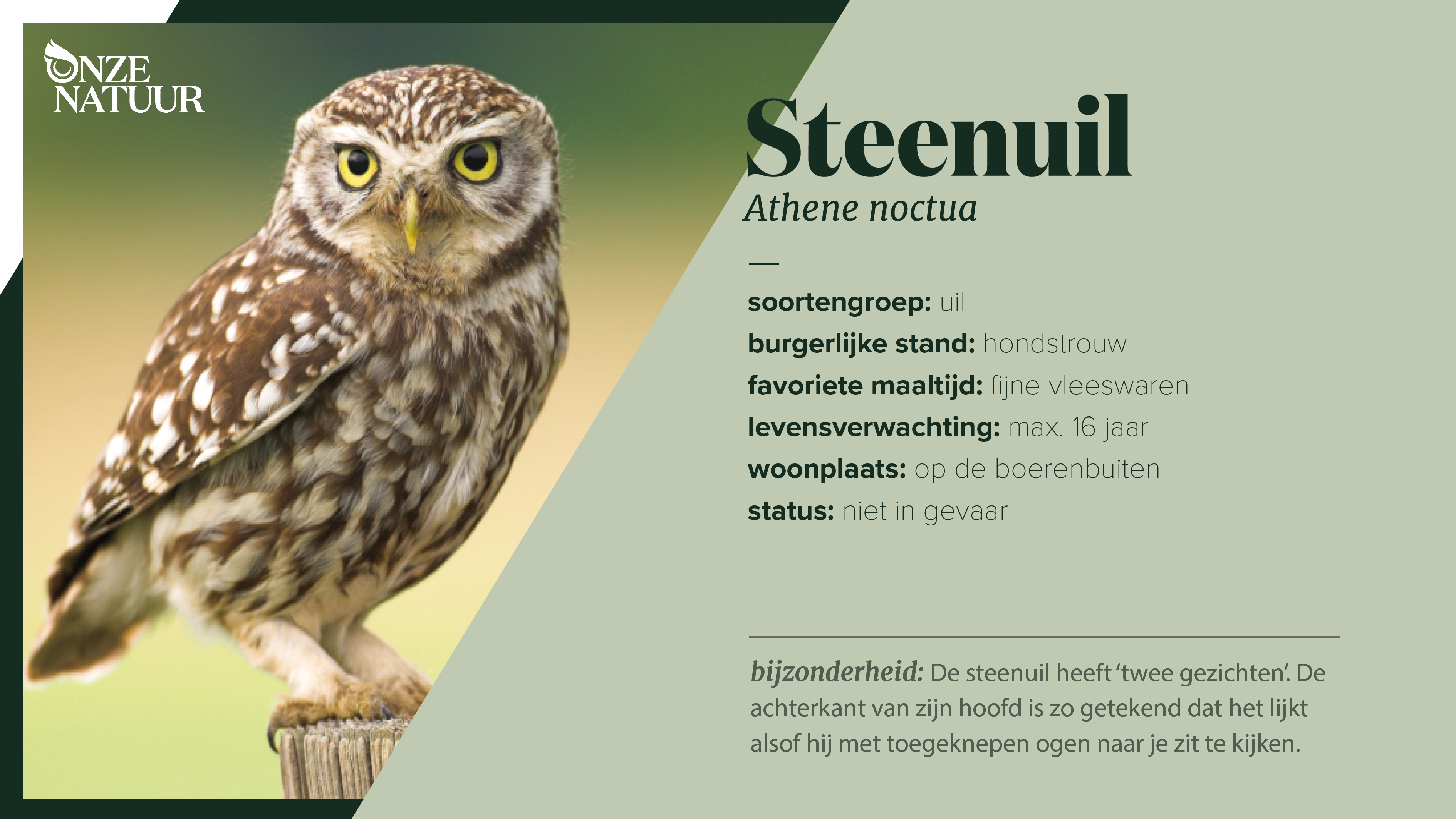 on-fiche-steenuil-nl.png