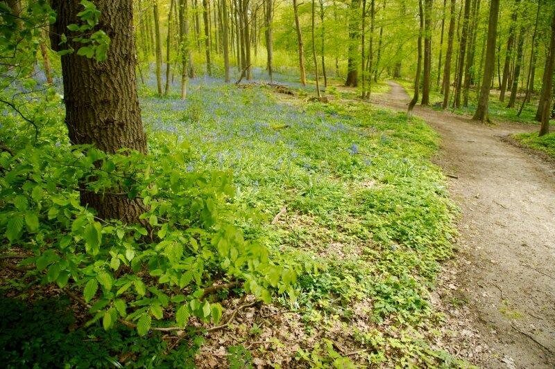 vilda-84276-wandelpad-in-het-bos-jeroen-mentens-800-px-48159.jpg
