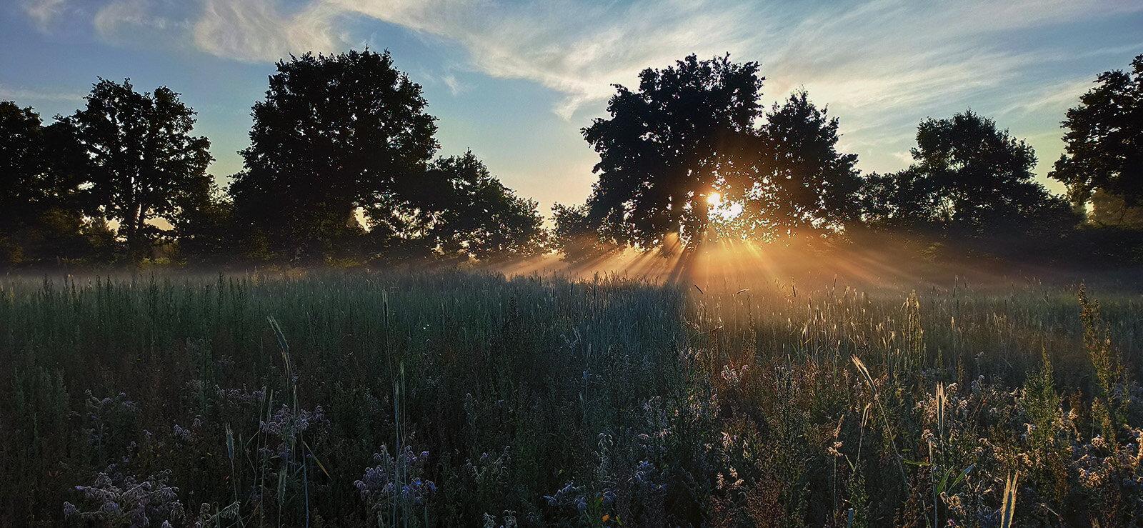 Zomers landschap bij zonsopgang