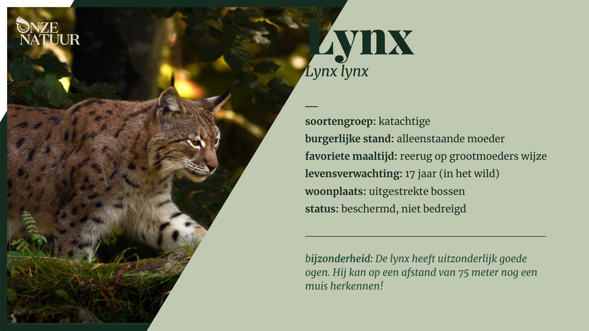 Alles over de lynx