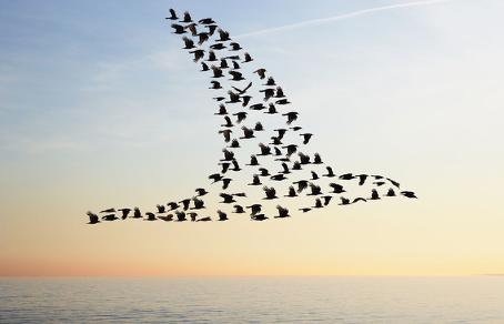 pour-leur-securite-les-oiseaux-migrateurs-voyagent-par-beau-temps-photo-france-inter.png