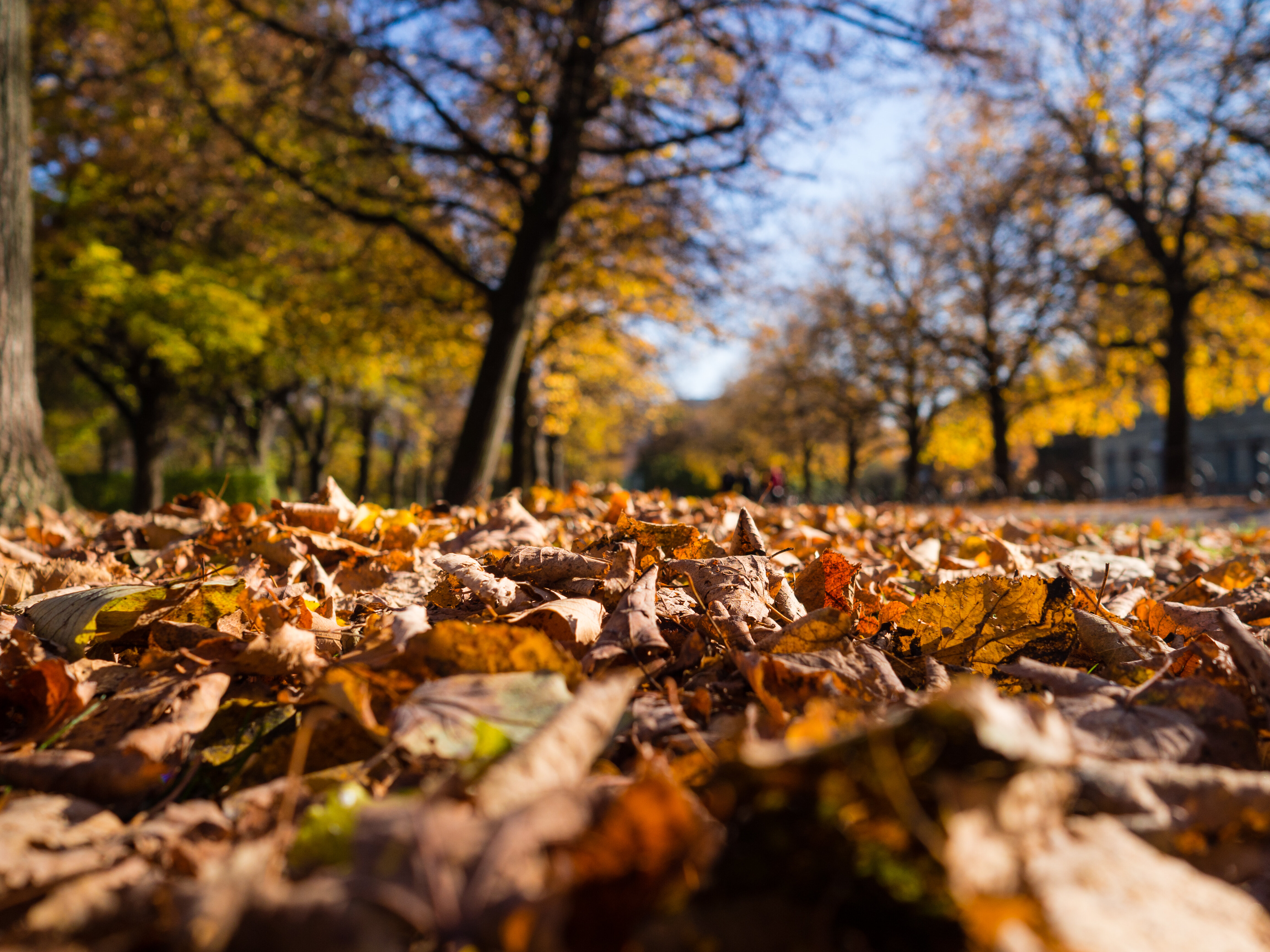header-herfst-vallende-bladeren-bladverlies-bomen-onze-natuur.jpg