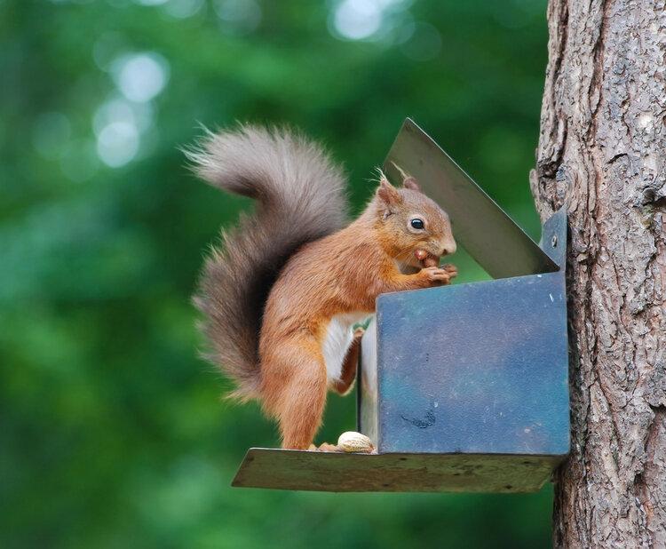 eekhoorn-herfstgids-onze-natuur.jpg
