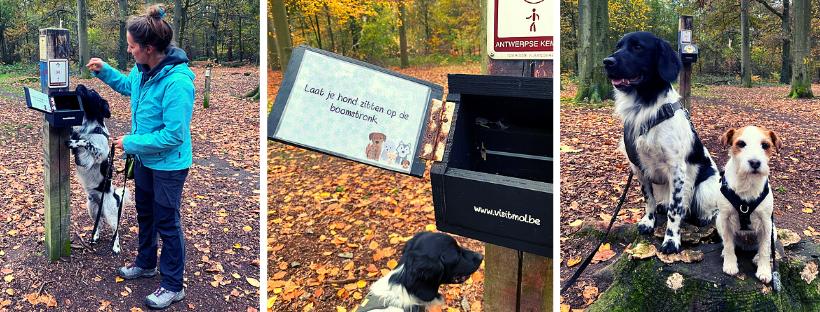 De honden krijgen als opdracht: 'ga op een boomstronk zitten'