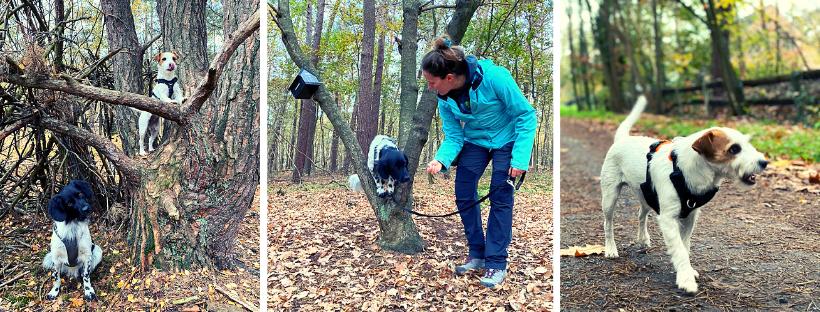Verschillende opdrachten: poseren in een takkenkamp, doorheen een boom springen en een dennenappel apporteren