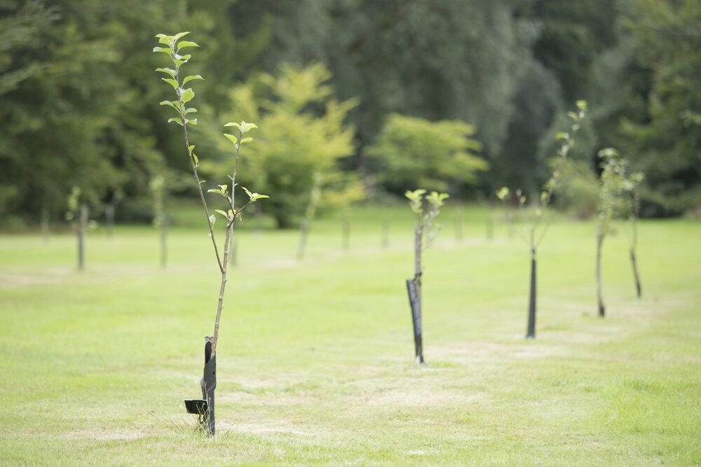 bomen-planten-jonge-bomen-onze-natuur.jpg