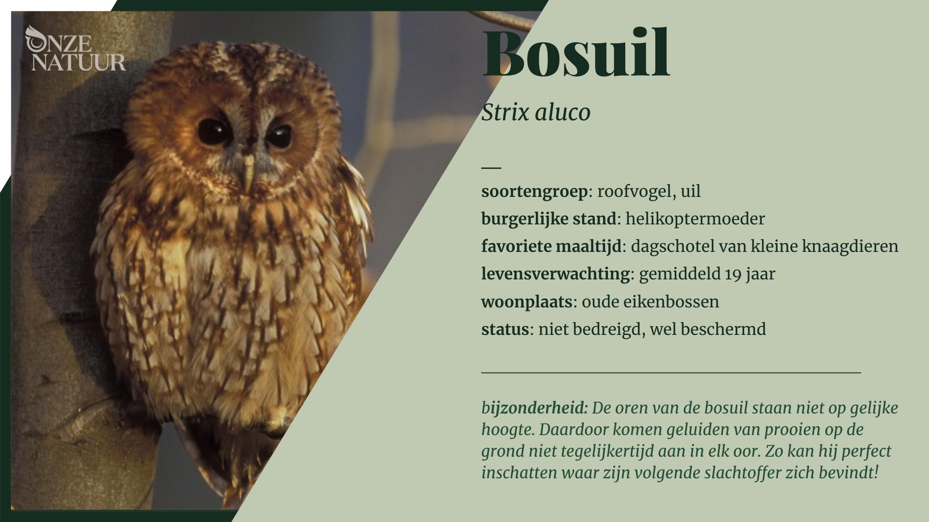 bosuil-soortenfiche.png