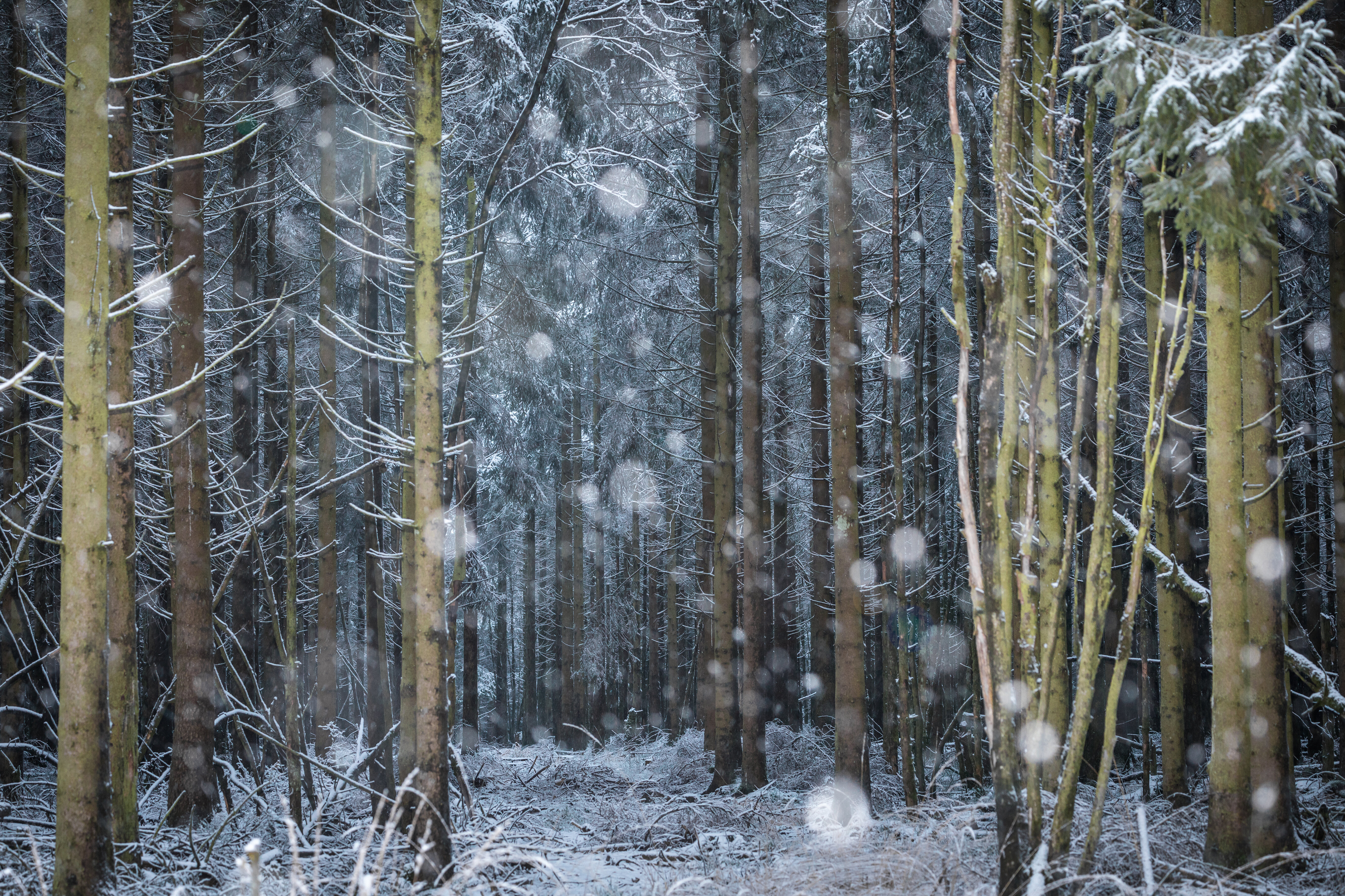 hogevenen-sneeuw-hannekevc.jpg