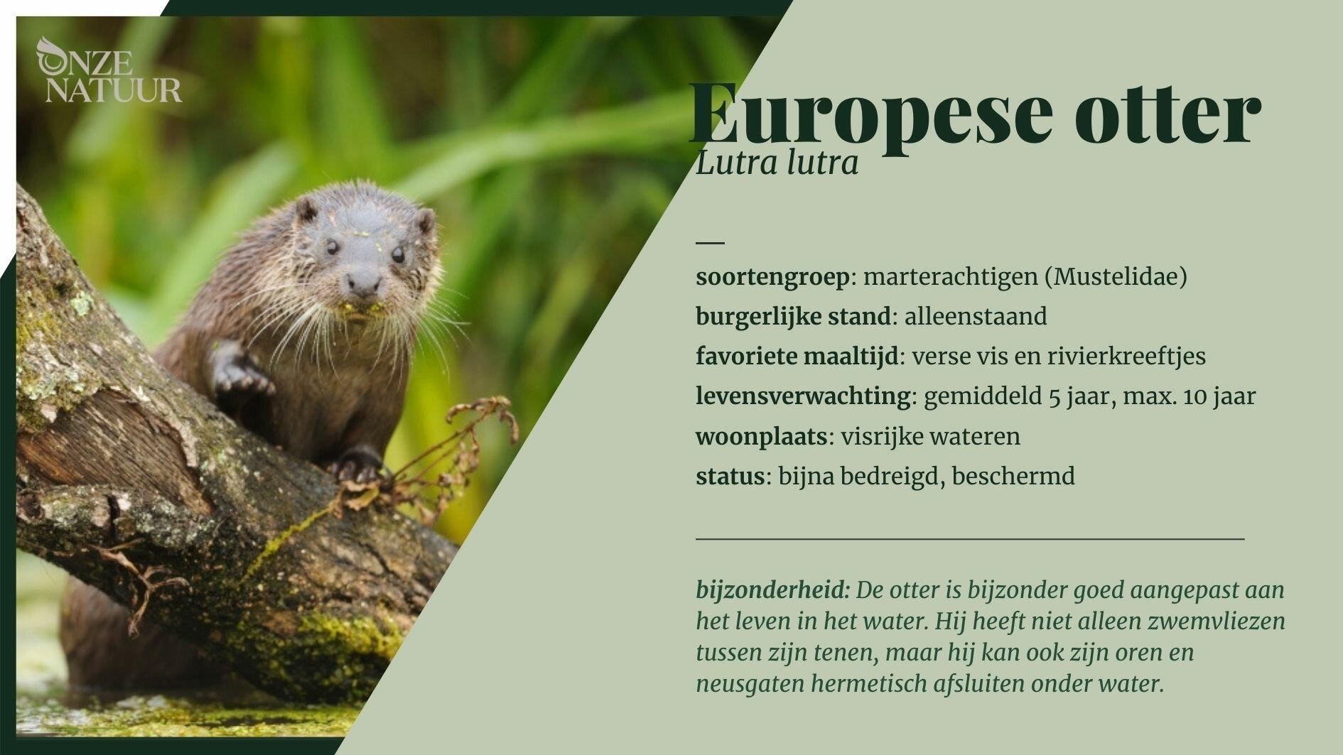 kopie-van-gewone-zeehond-nl.jpg
