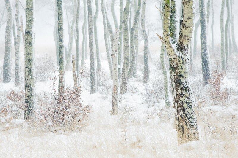 vilda-107784-winters-berkenbos-lars-soerink-800-px-50721.jpg