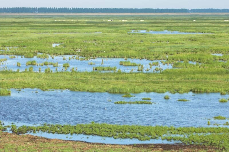 vilda-29704-het-verdronken-land-van-saeftinghe-yves-adams-800-px-50796.jpg