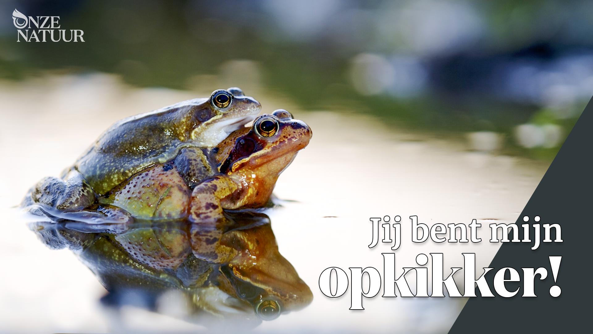 onze-natuur-complimentkaart-kikker.png