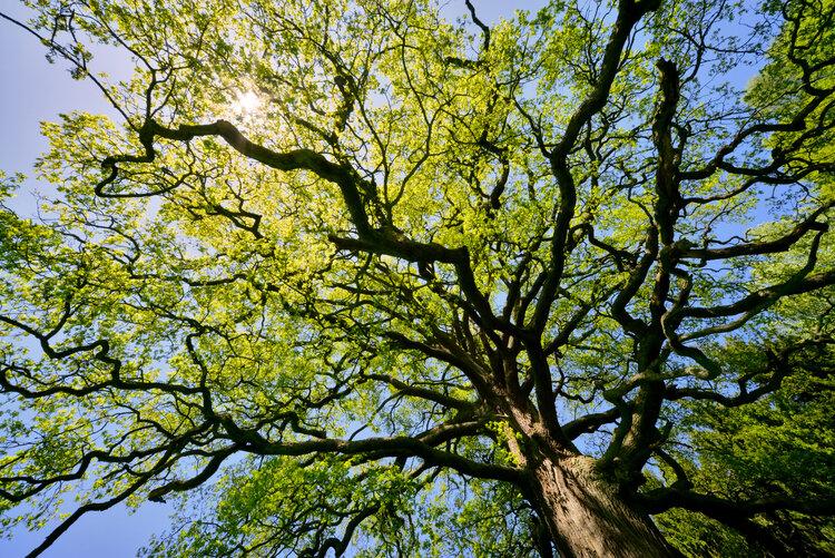 bladerdek-bomen-takken.jpg