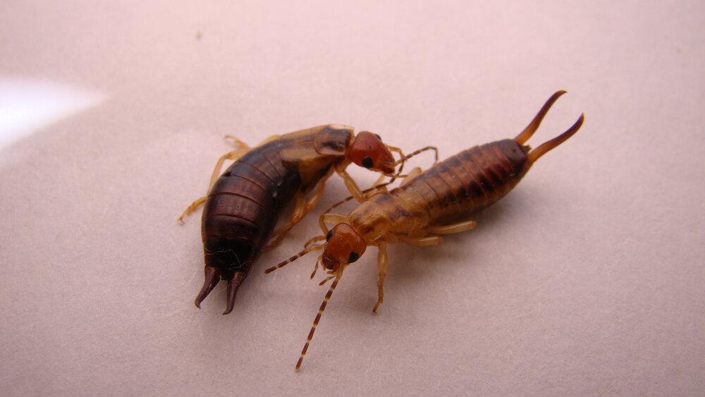 Links het vrouwtje, rechts het mannetje