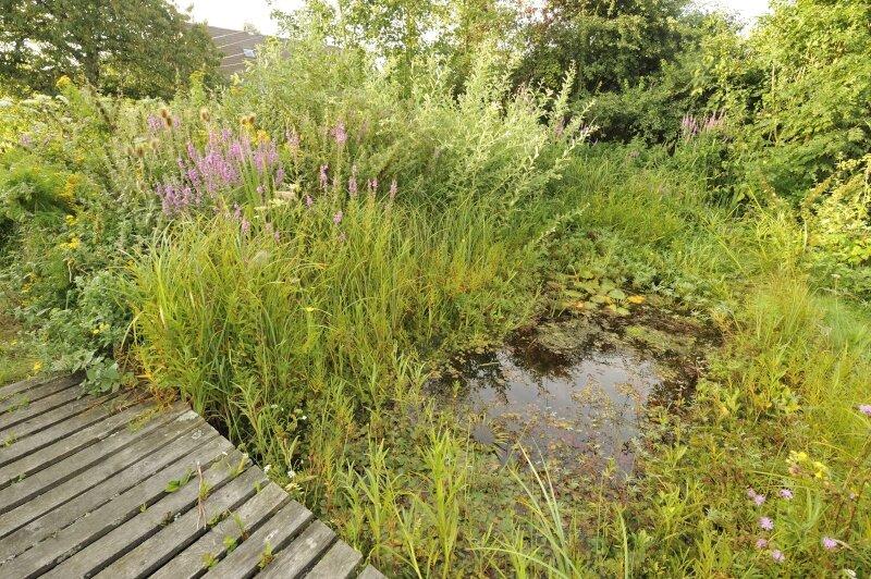 vilda-76573-natuurlijke-tuinvijver-rollin-verlinde-800-px-51352.jpg