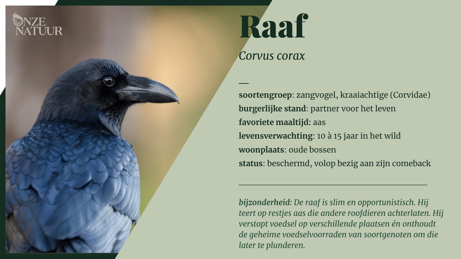 on-soortenbank-raaf-nl.png