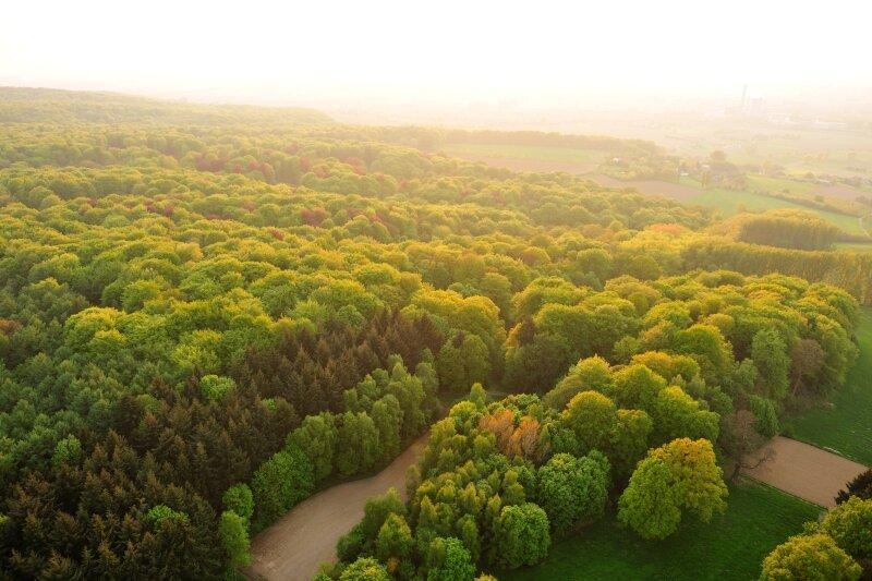 Je ziet het Kluisbos dat gefotografeerd werd vanuit de lucht.