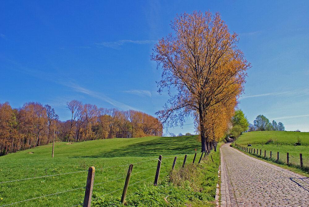 Je ziet een afbeelding van de Koppenberg in Melden.