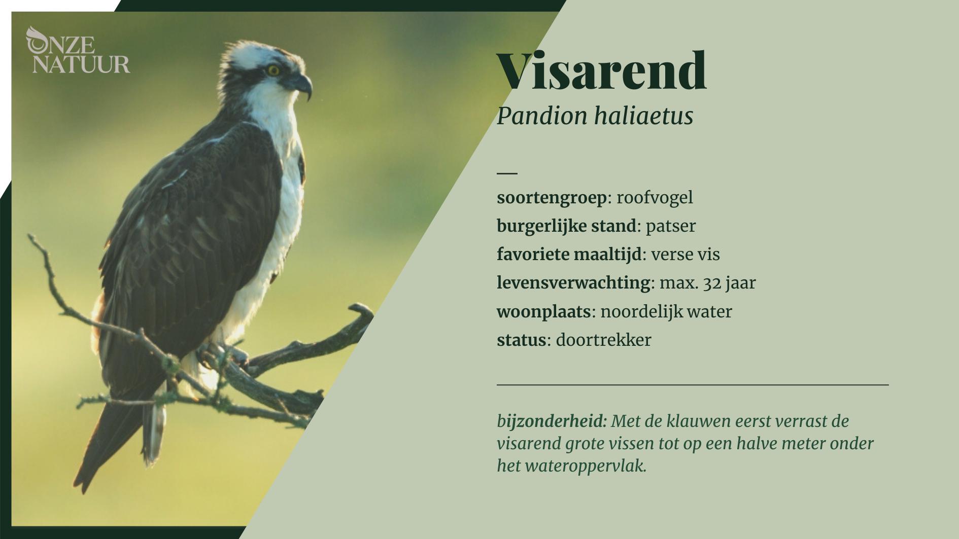 fiche-visarend-nl.png