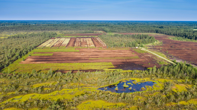 Turfwinning in veengebied in Estland