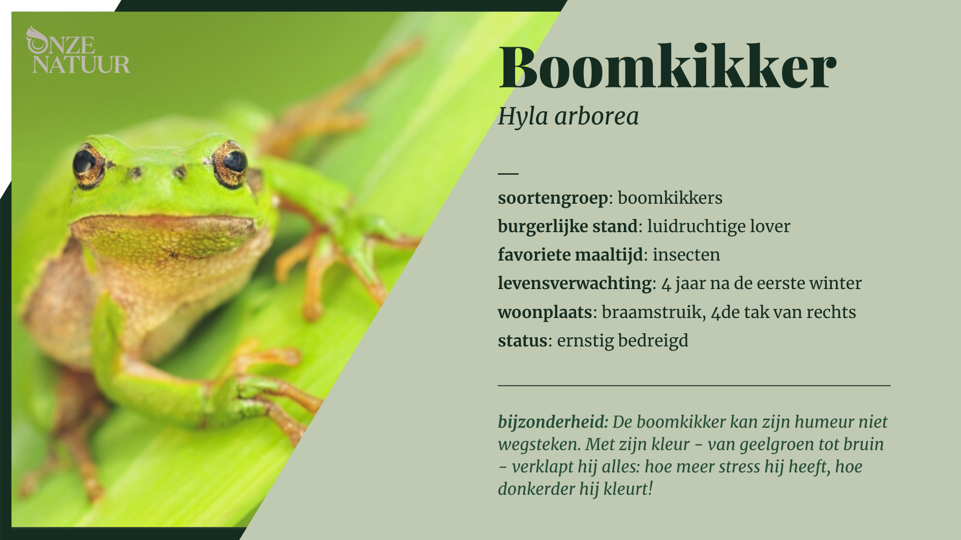 Boomkikker in vegetatie