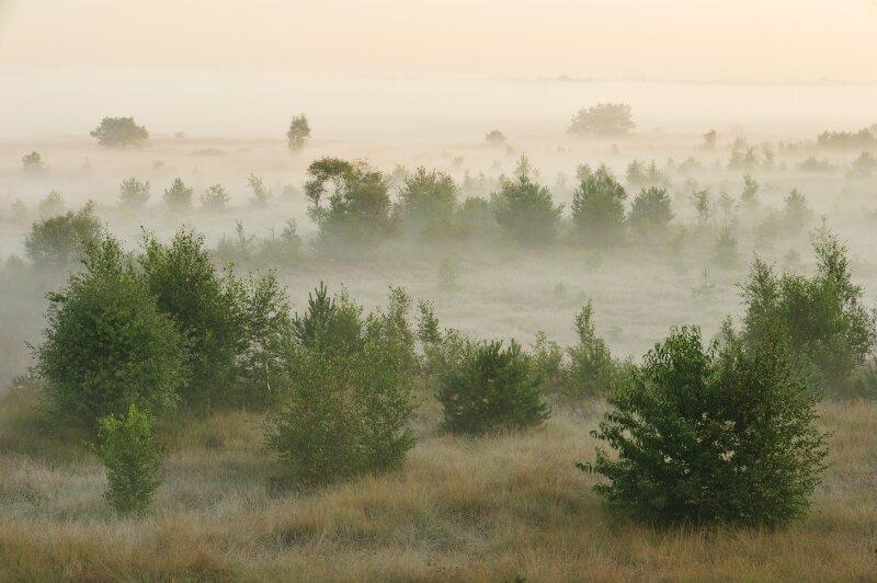 Een foto van het schietveld waarbij de mist tussen de planten te zien is.