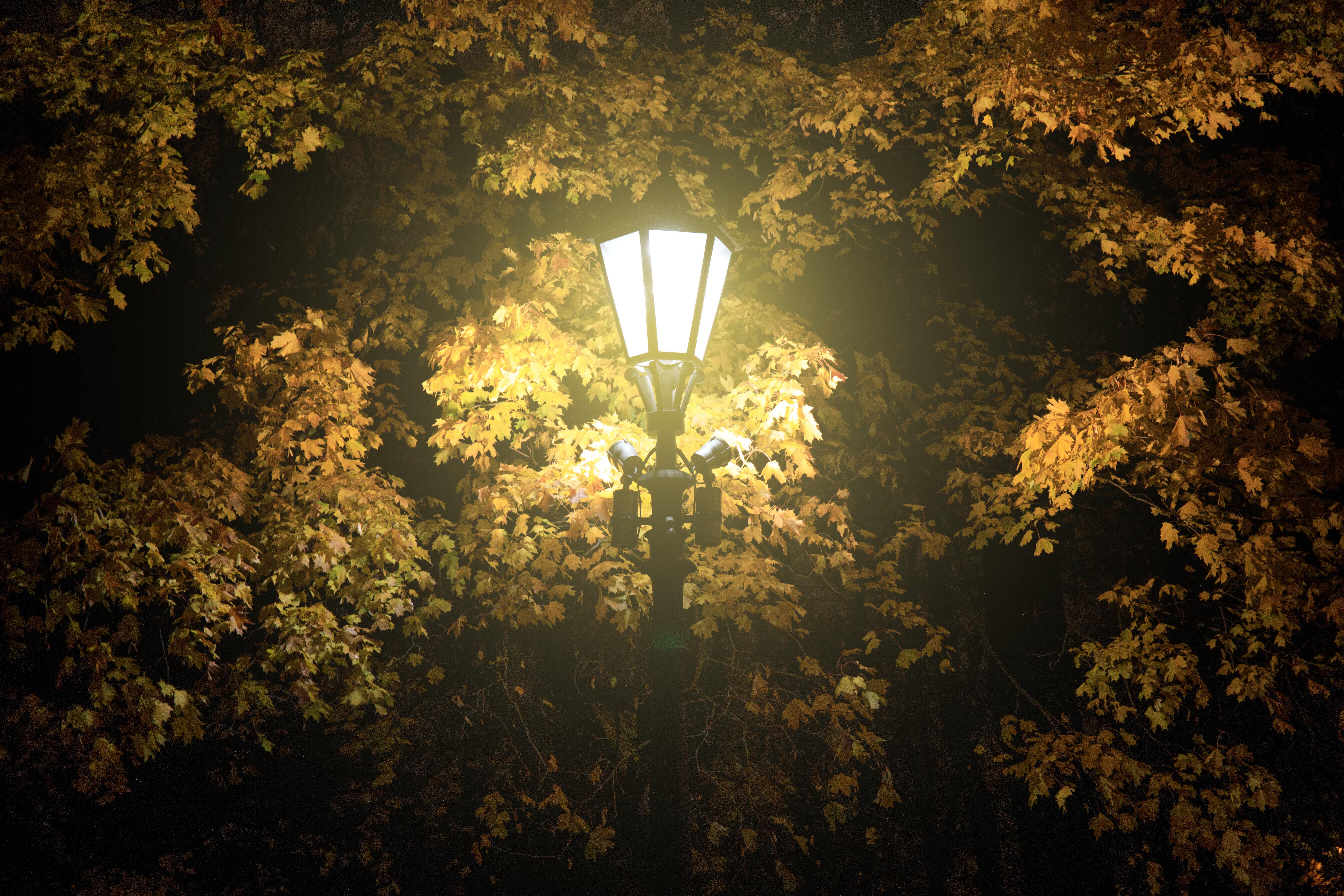 straatverlichting-in-bos.jpeg