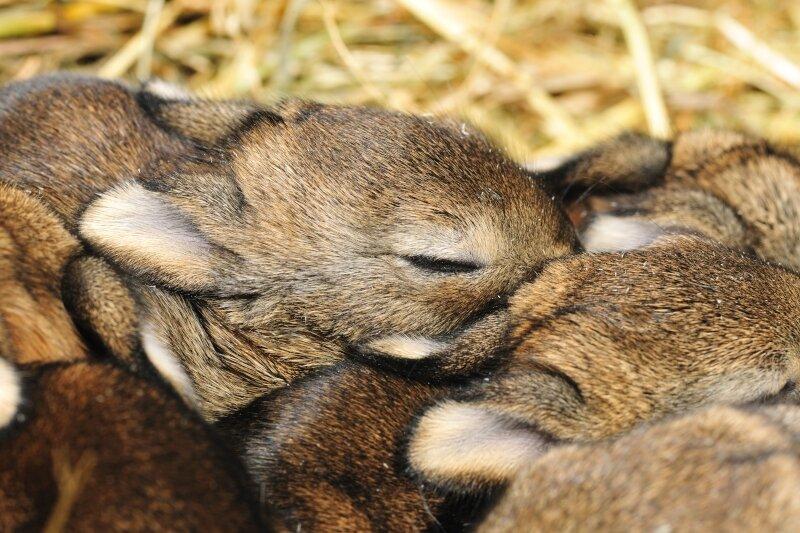 jonge-wilde-konijntjes.jpg