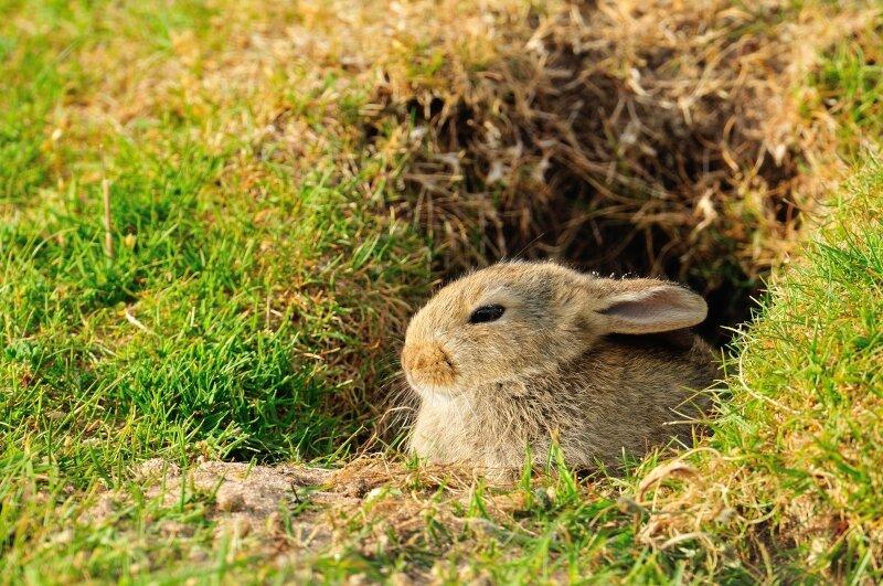 konijn-aan-konijnenpijp.jpg