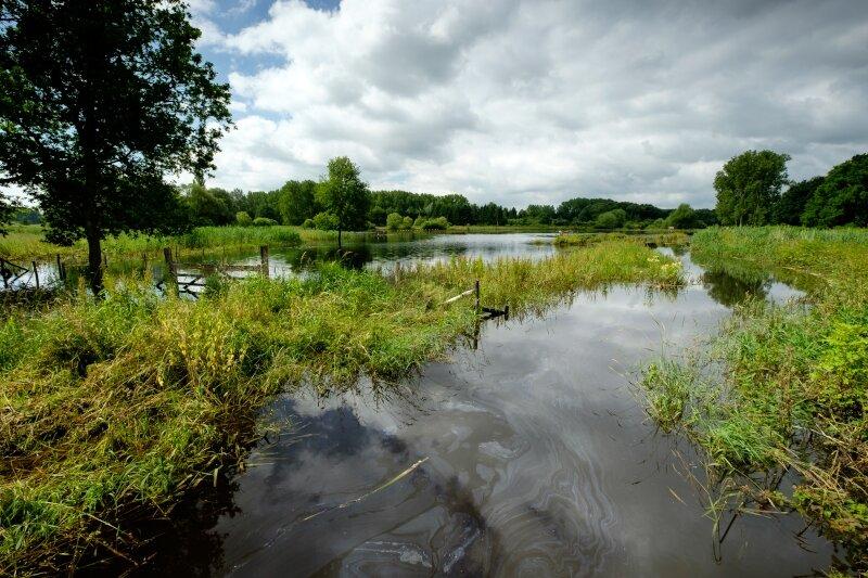 Overstroomd grasland in de Demervallei